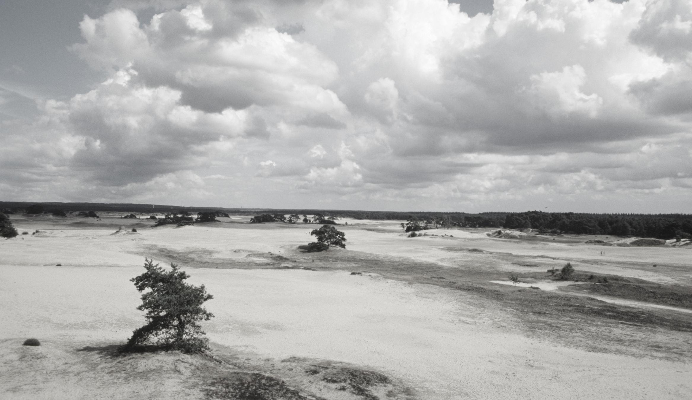 Kootwijkerzand Image0026-1