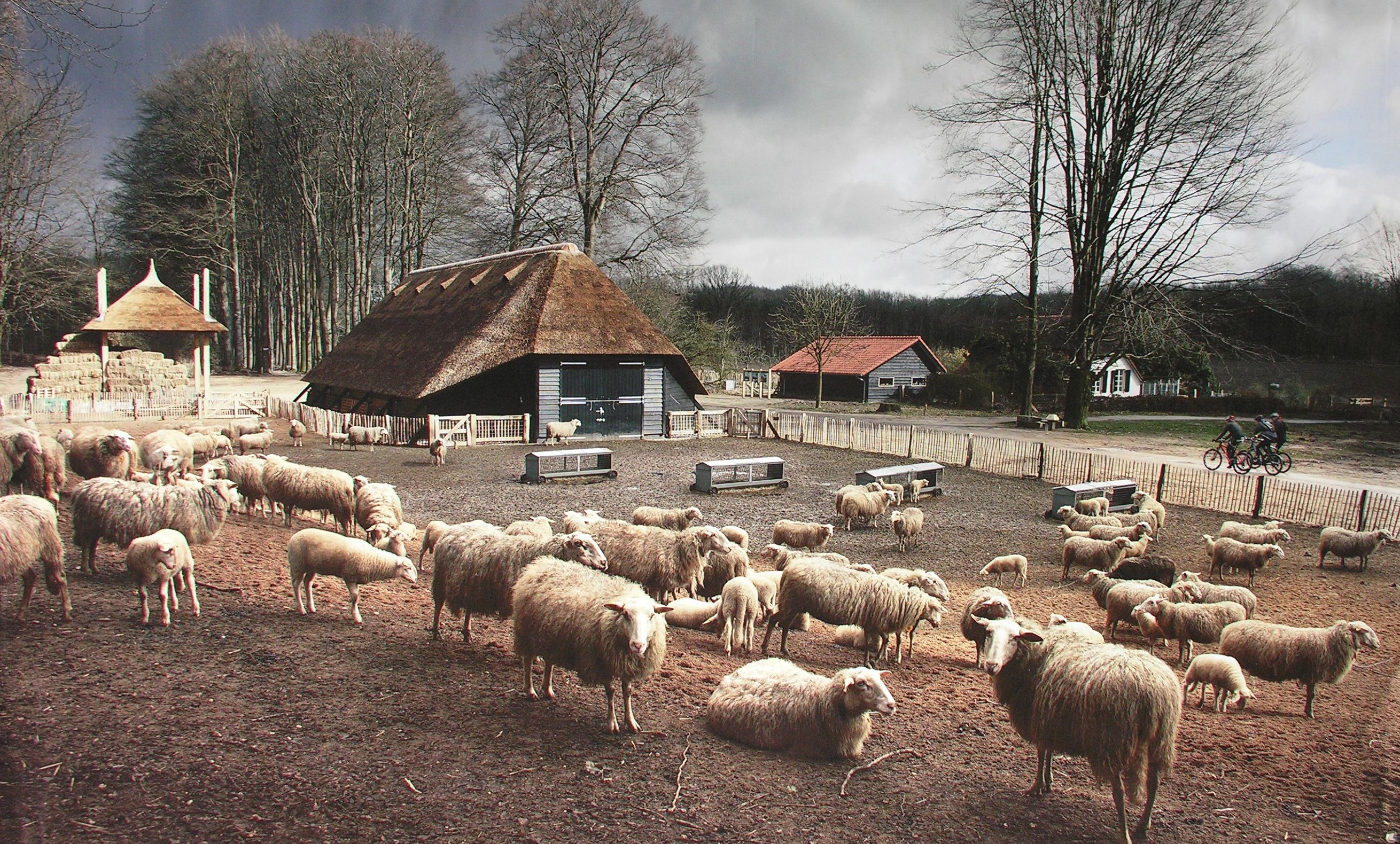 Schaapskooi Hoog-Buurlo